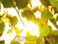 листья_солнце
