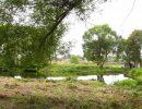 Есть в старом парке чистый пруд