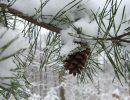 Погода на четверг, 23 февраля: ночью мороз, днем снег и дождь