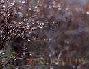 Погода на пятницу, 17 марта: мокрый снег, дождь и туман