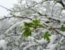 sneg-may