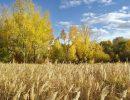 Погода на вторник, 12 сентября: синоптики прогнозируют аномальную жару