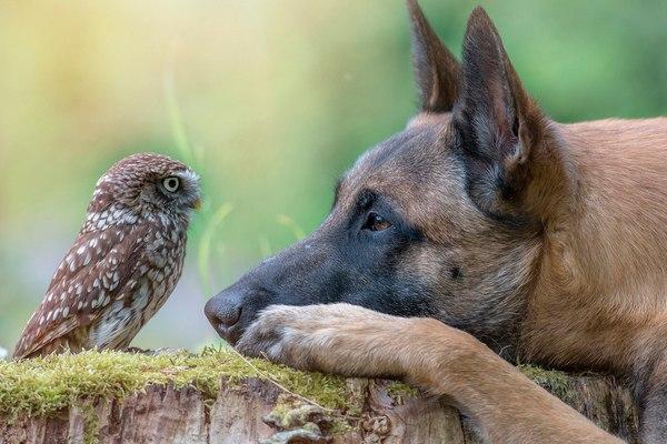 собака и птица,bird and the dog