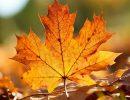 Погода на субботу, 7 октября: прогнозируется день рождения президента