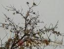 Стоит ли ожидать 20-градусных морозов в ноябре, как обещали синоптики?