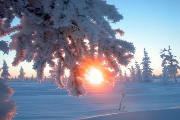зима,зимнее солнцестояние,ель,снег,солнце,