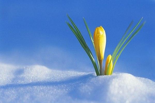 Чего ожидать этой весной каждому знаку Зодиака