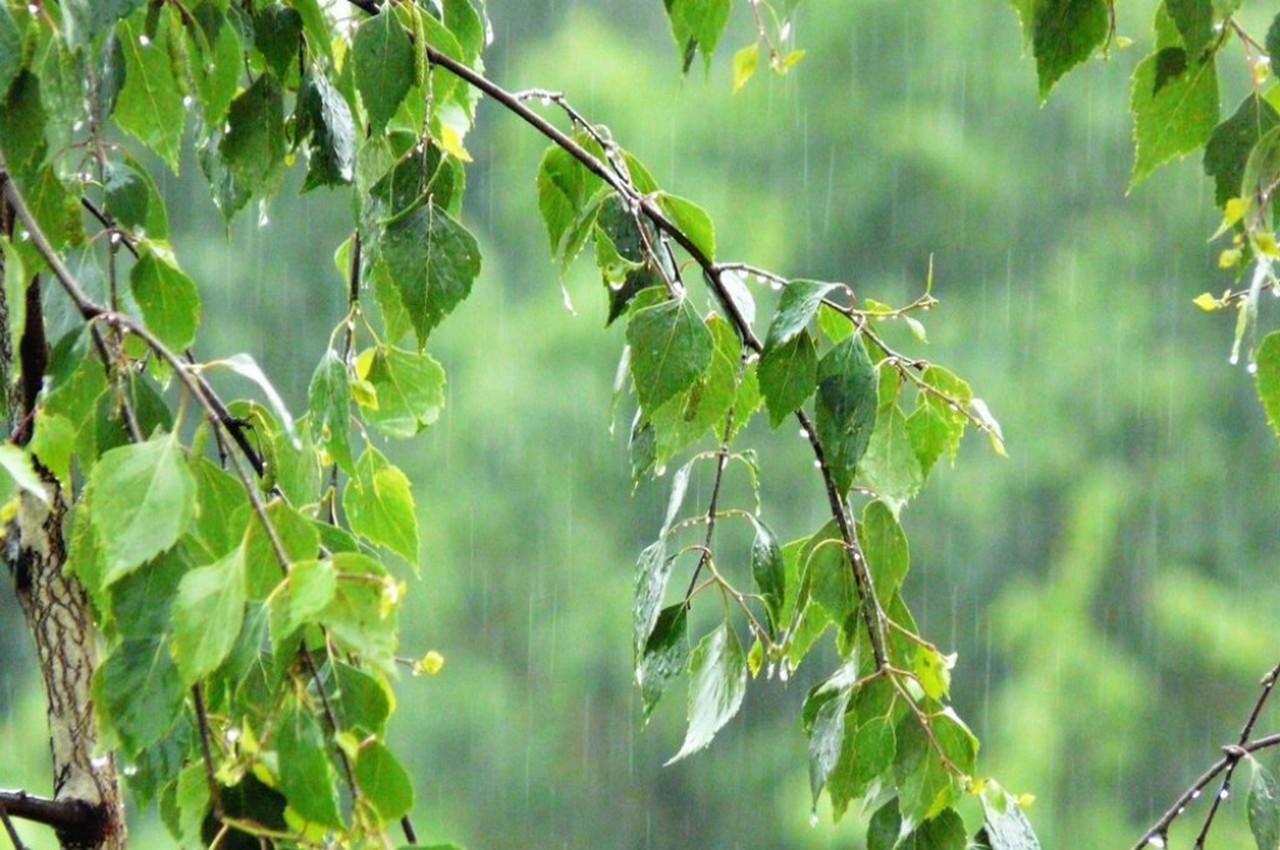 Погода на понедельник, 23 июля: жара спадёт, но ненадолго