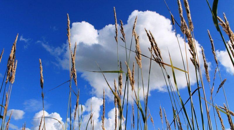 жара,небо,лето,поле,