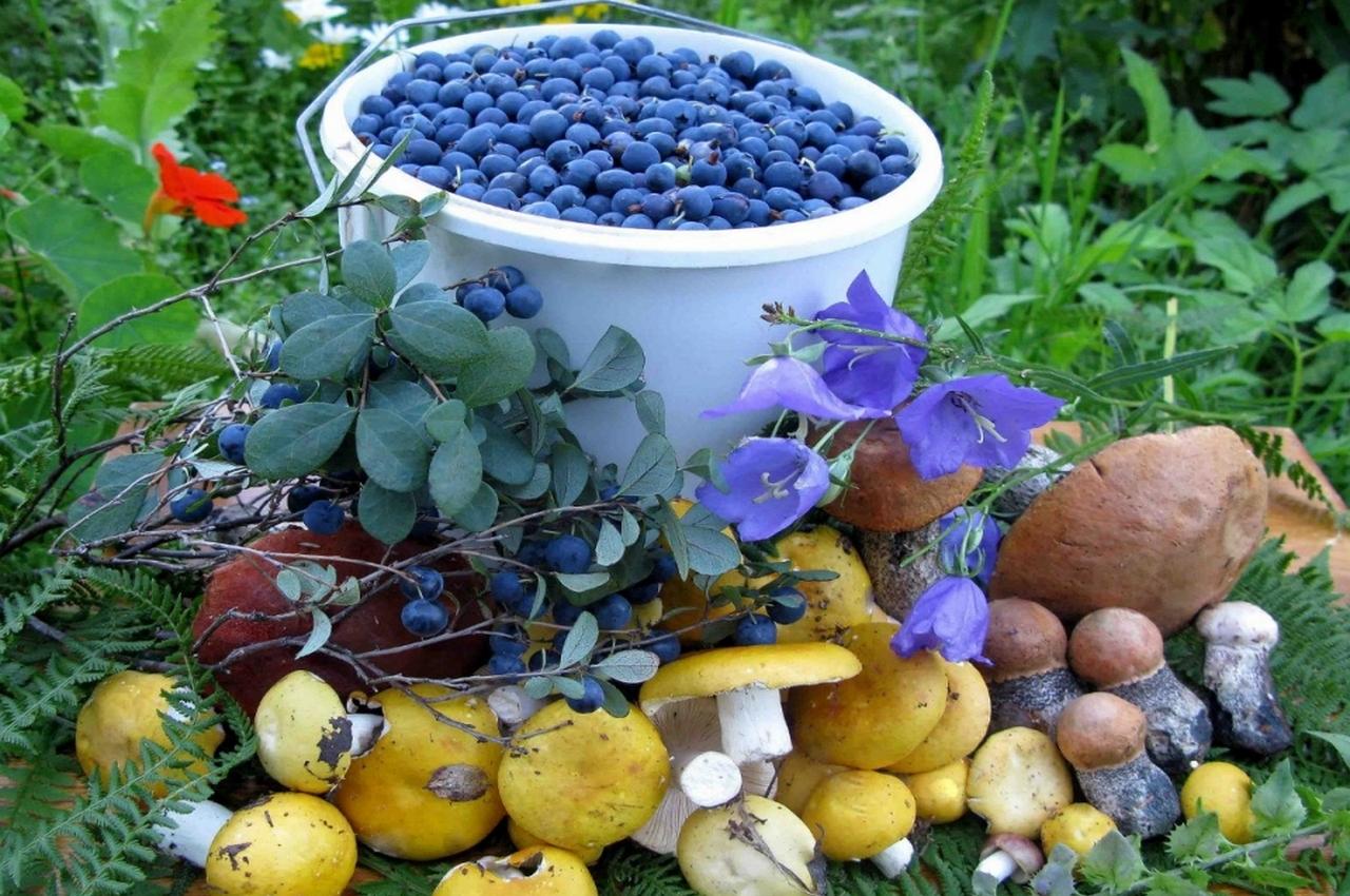 За сбор в лесу грибов и ягод придется ли платить налог или нет?