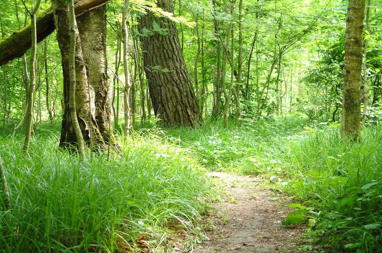Полиция просит жителей региона не ходить в лес в одиночку