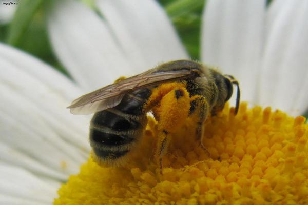 2 июля — Зосима Пчельник. Что можно и что нельзя делать в этот день