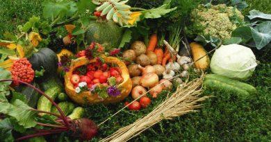 август,овощи,фрукты,