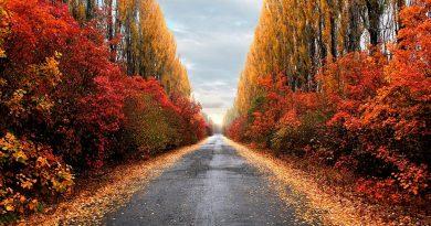осенняя дорога,дорога в осень,