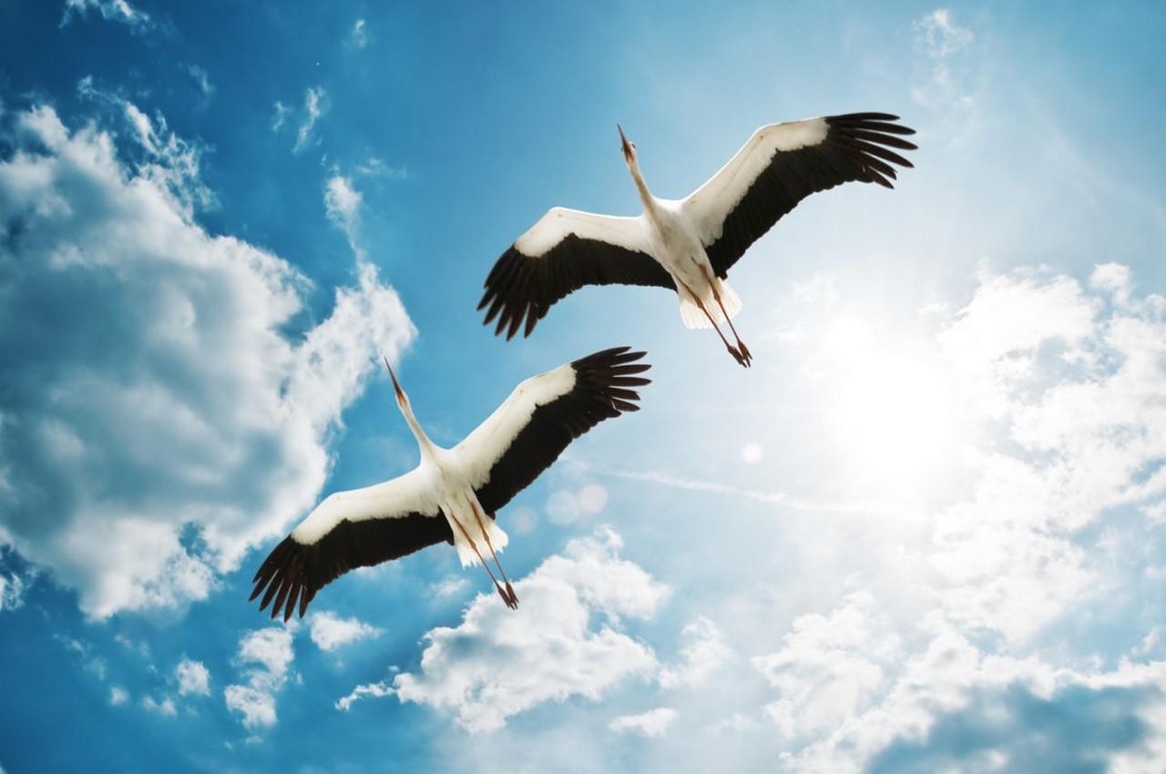 20 августа — Марины-Пимены. Традиции и приметы