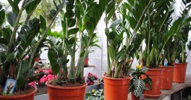 комнатные растения,лунный календарь комнатных растений,
