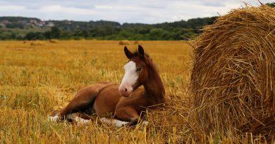 конь,сено,лето,лошадиный праздник,