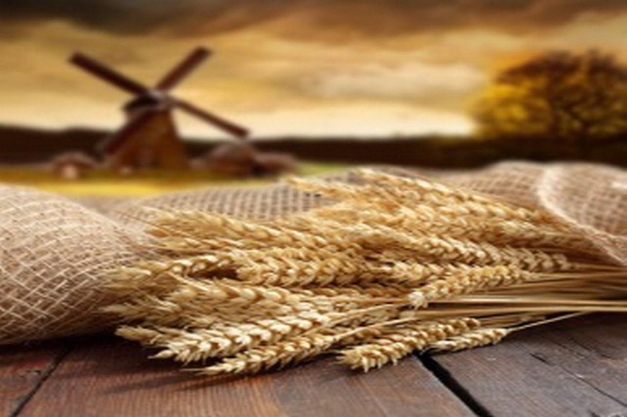 23 августа — Лаврентьев день (Праздник мельника). Приметы и традиции
