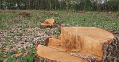 незаконная рубка деревьев,