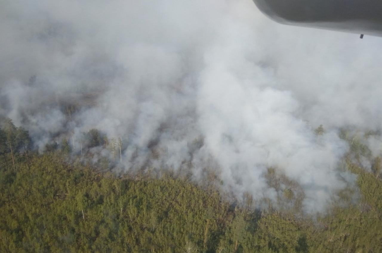 Площадь лесного пожара в 33-м регионе сократилась ещё в два раза