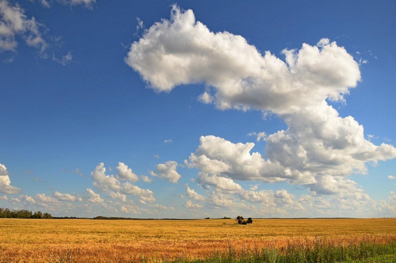 Погода на понедельник, 27 августа: солнечно и жарко