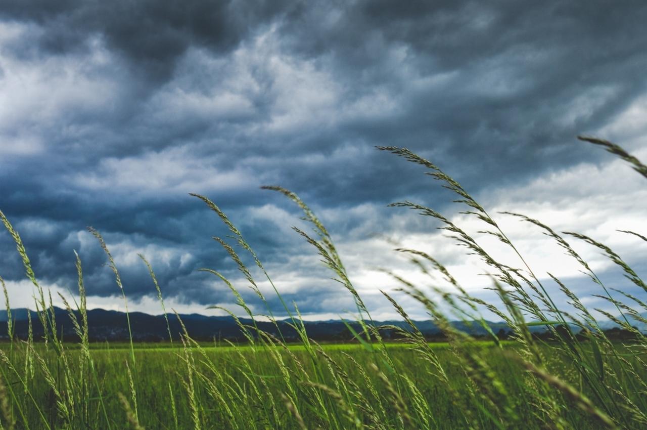 Погода на четверг, 16 августа: дожди и грозы