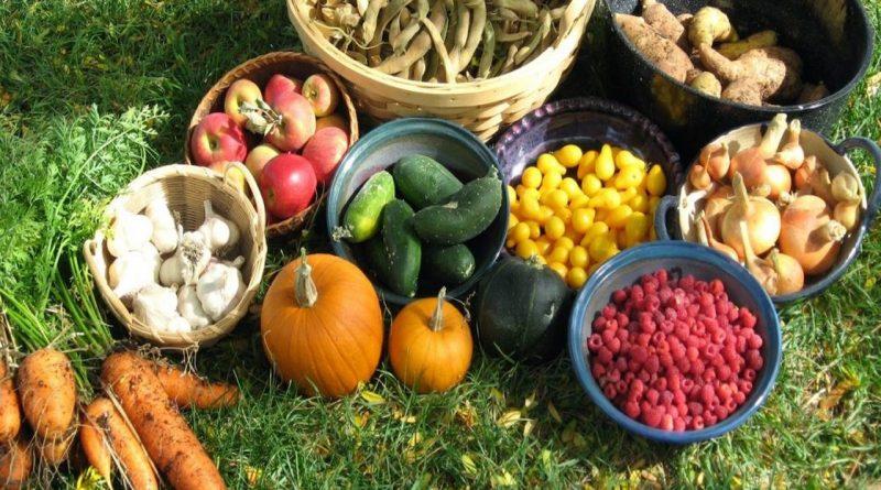 сентябрь,урожай,сад-огород,лунный календарь,
