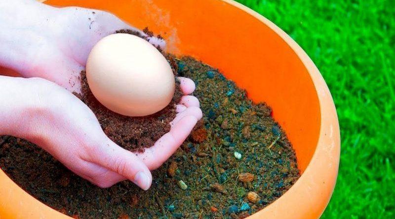 закопать в саду яйцо,