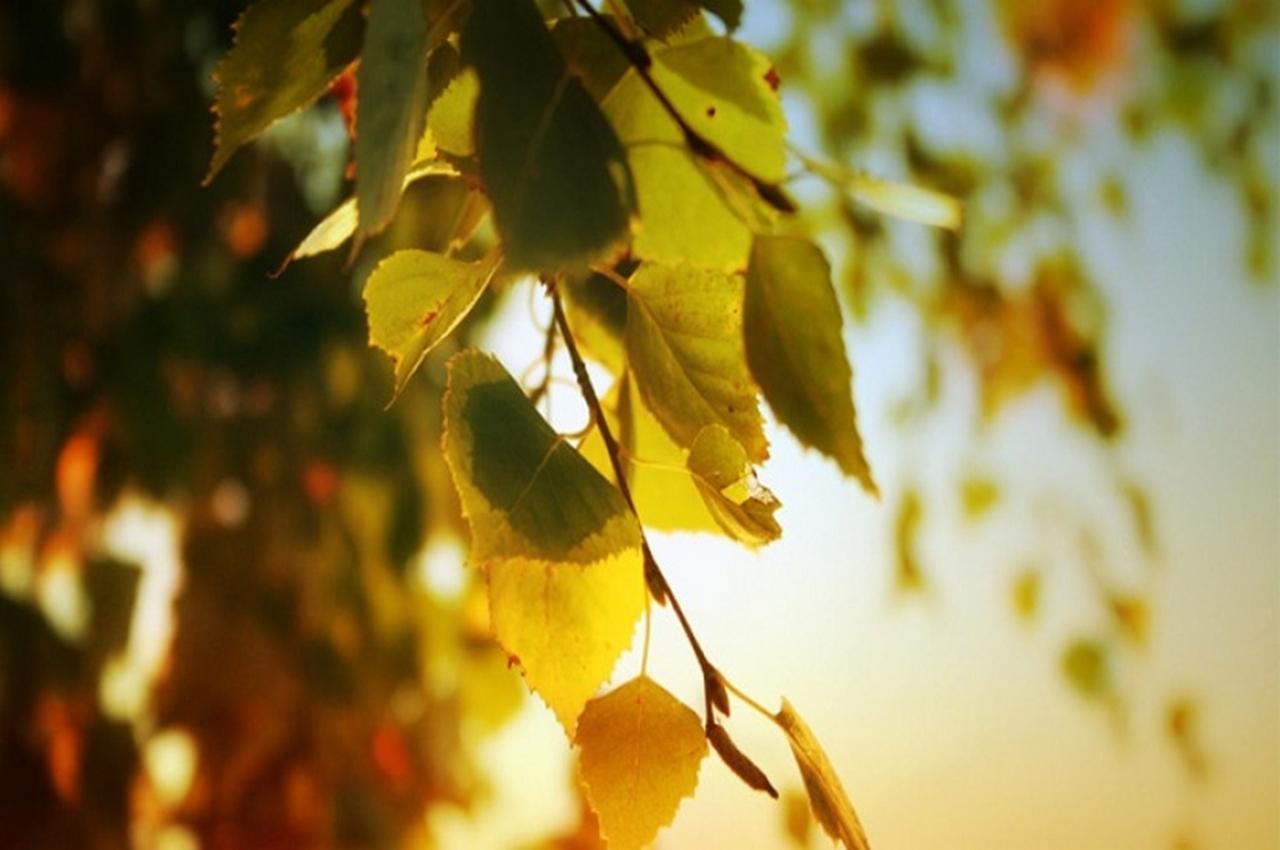 14 сентября — народный праздник Семён Летописец. Традиции и приметы