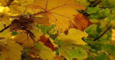 смена сезонов,лето на осень,