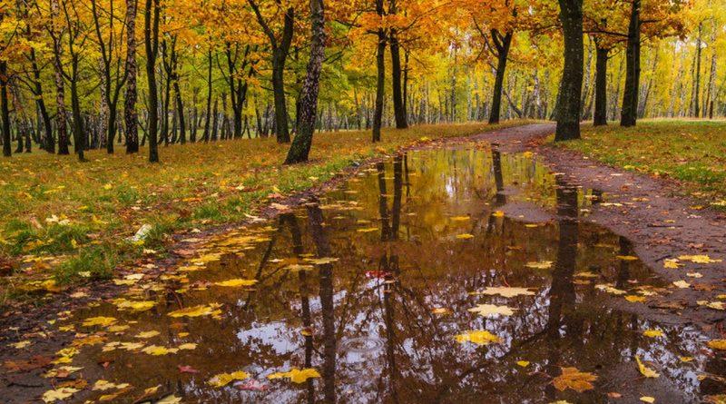 осень,дождь,погода,