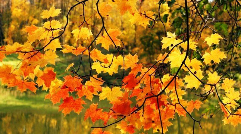 осенины,листья,осень