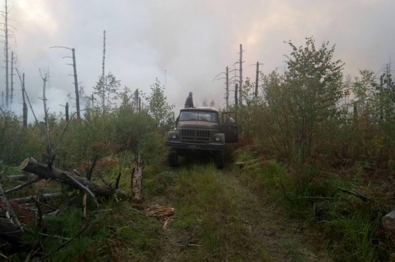 За прошедшие сутки во Владимирской области случились 9 лесных пожаров