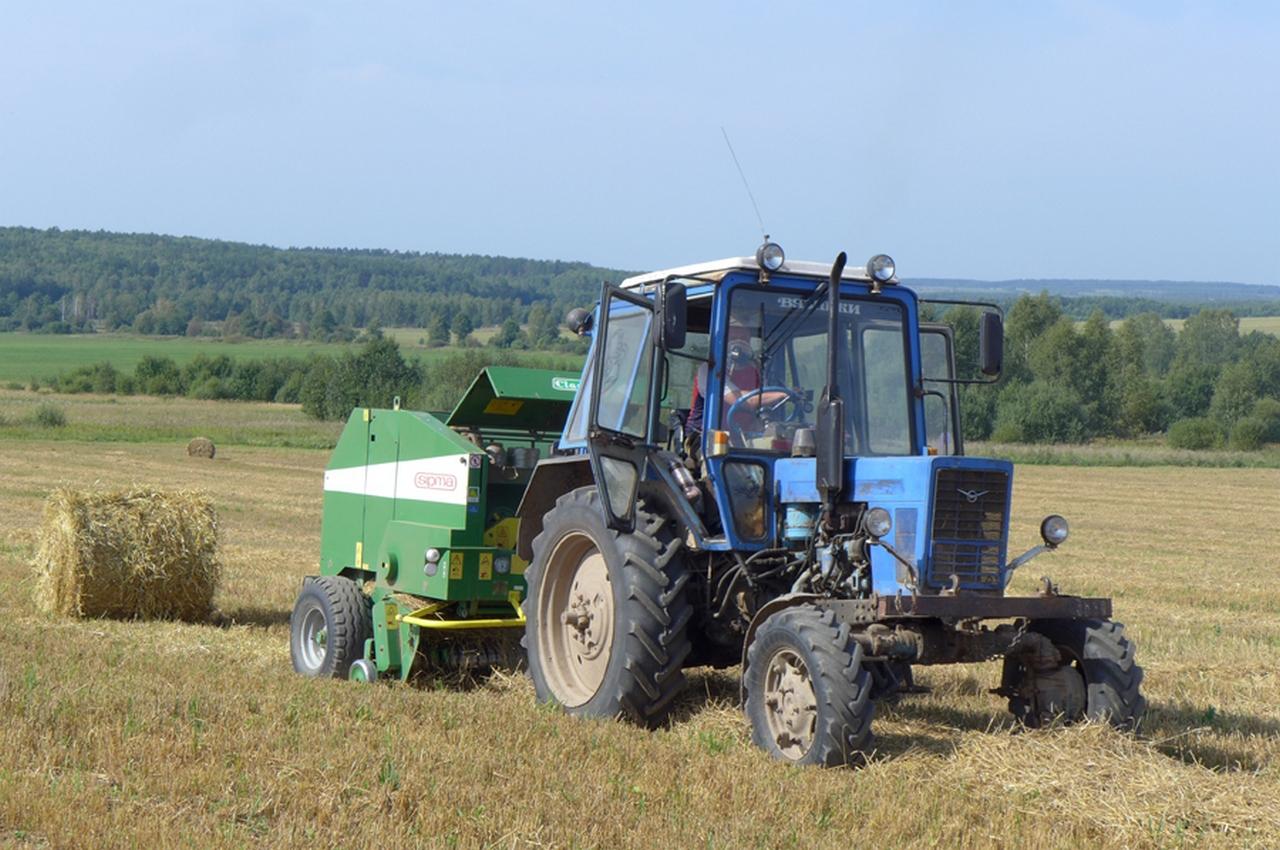 Вязниковским аграриям портят настроение кукурузные воры