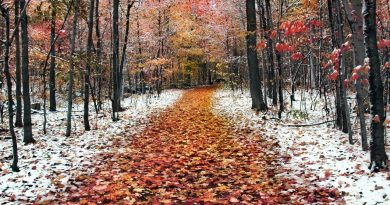 глубокая осень,поздняя осень,