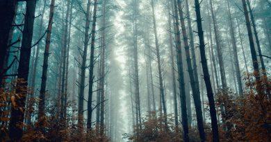 лес,осень,