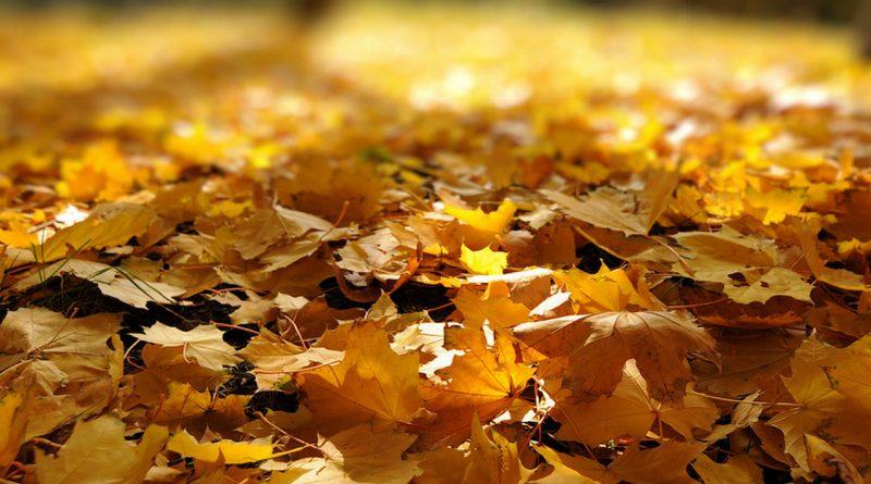 осень,листья,опавшие листья,погода,