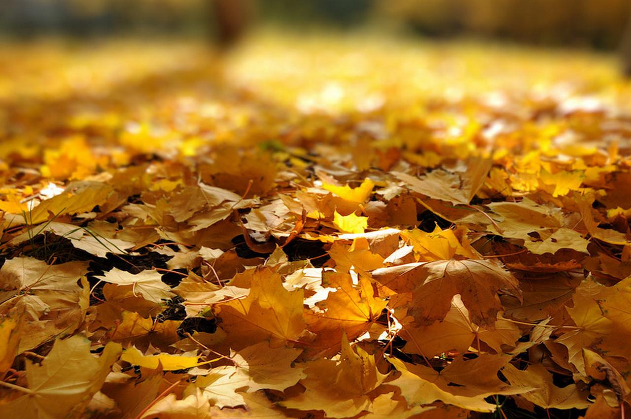 Погода на воскресенье, 14 октября
