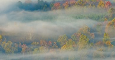 осень,туман,
