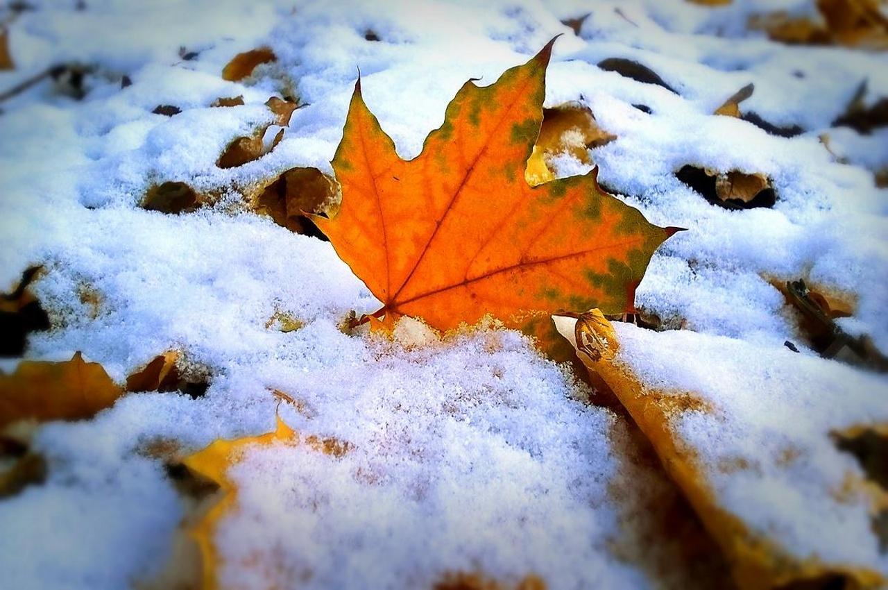 Синоптики прогнозируют первый снег через неделю