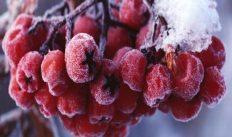 28 октября — народный праздник Ефимий Осенний. Зима приближается