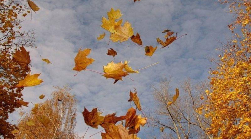 осень,октябрь,листопад,ветер,кружатся листья,Астафий Ветряк,