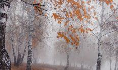 Погода на пятницу, 2 ноября 2018 года. Время зимы еще не пришло