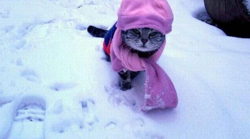 зима,кот в шапке,снег