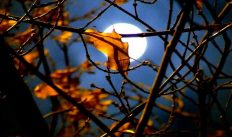 Лунный календарь цветовода на ноябрь 2018 года