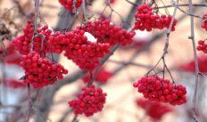 5 ноября — народный праздник День Якова. Традиции и приметы