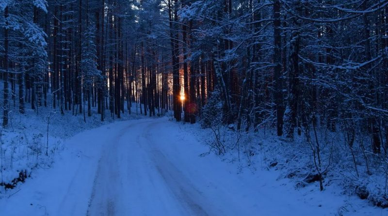 лес,зима,мороз,декабрь,