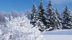 17 декабря — Варварин день. Что можно и что нельзя делать в этот праздник?