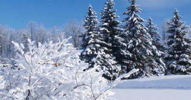 морозы,зима,декабрь,лес,варварин день,бабий праздник,