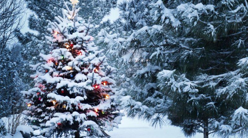 Новый год,погода,лес,зима,ёлка,